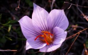 Степные цветы и шиповник