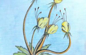 Фантастические цветы