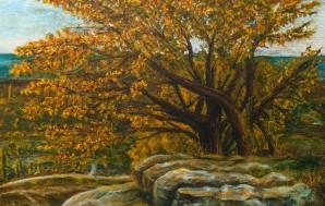 северное дерево
