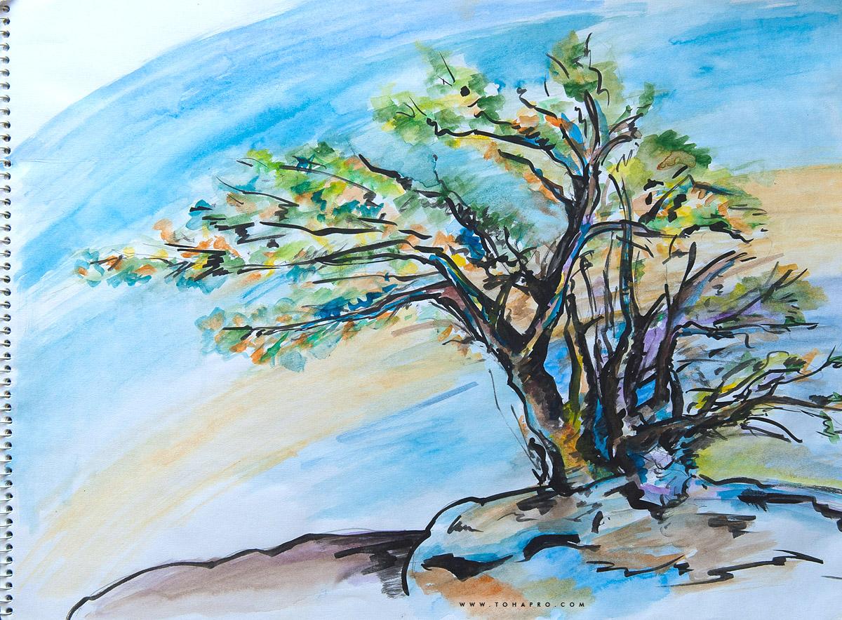 Северное дерево 2